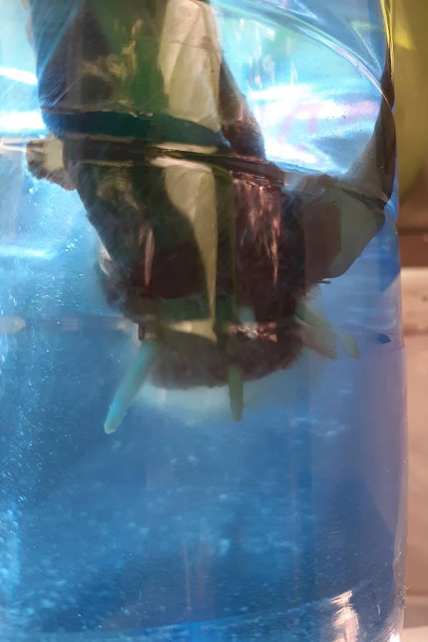 Fragori subacquei